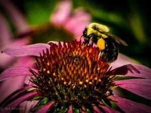 Bees & Butterflies-3